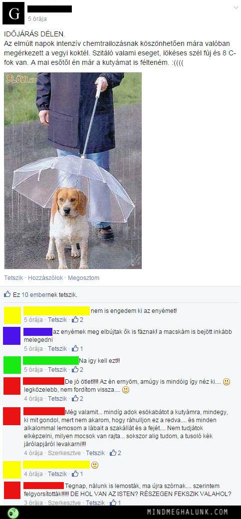 Gza kutya esernyovel