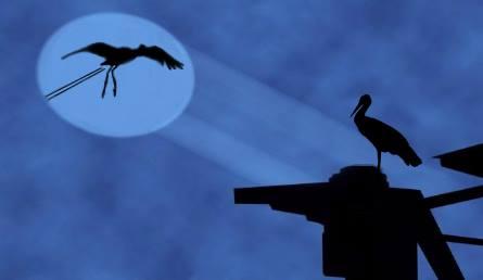 batman-golya