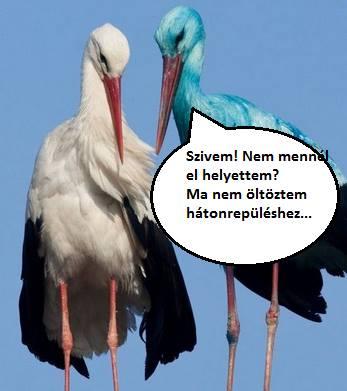 golya2