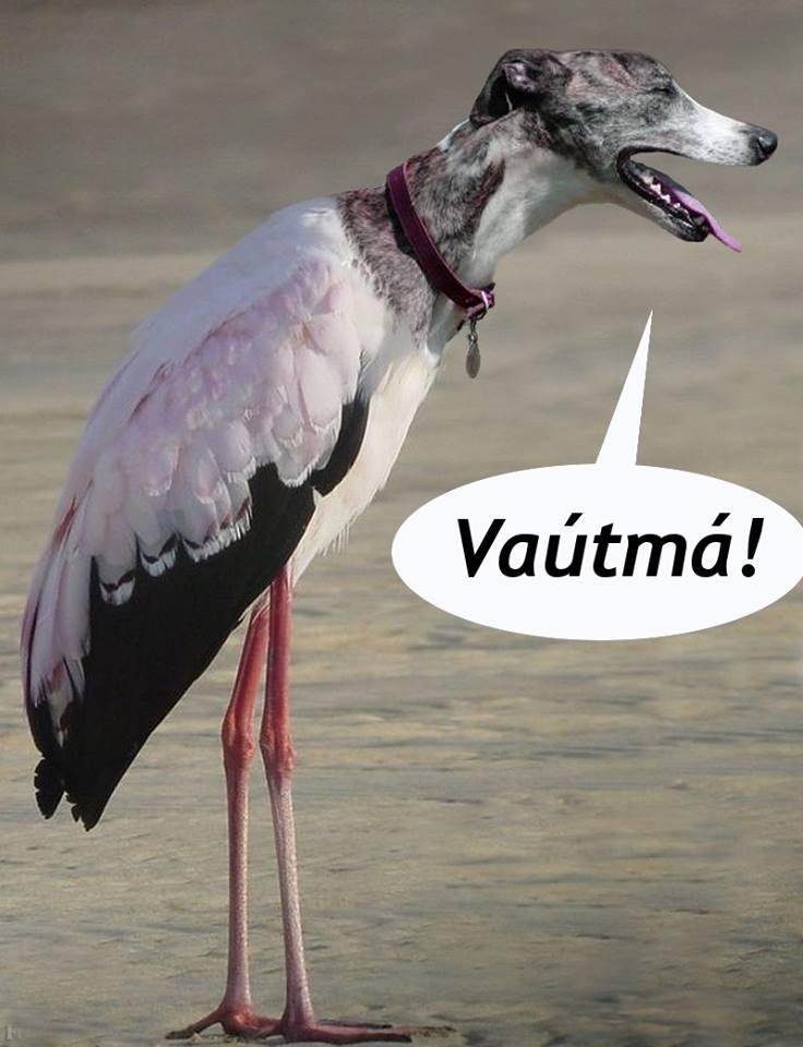 vautma